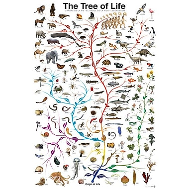 Evolution The Tree of Life, Stretched Canvas, 24