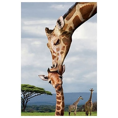 Giraffe Kissing Baby, Stretched Canvas, 24