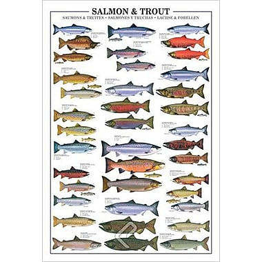 Salmon and Trout, Stretched Canvas, 24