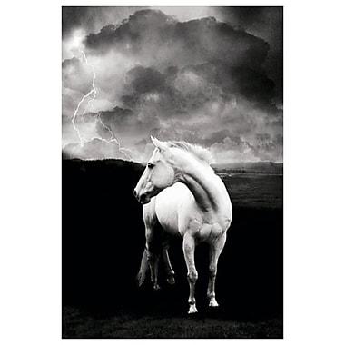 Cheval blanc, toile tendue, 24 x 36 po
