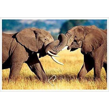 Éléphants africains au combat, toile tendue, 24 x 36 po