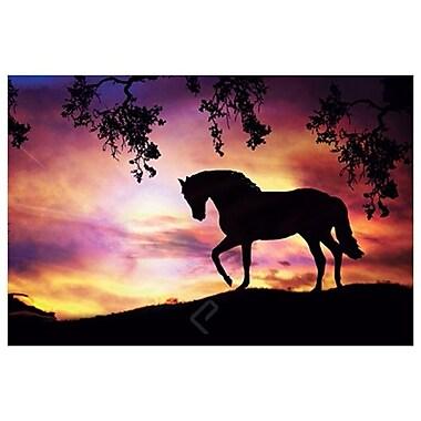 Black Stallion by Laird, Canvas, 24