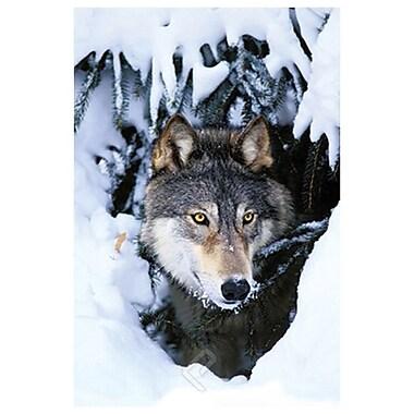 Loup d'hiver, toile étirée, 24 x 36 po