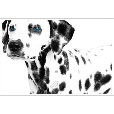 Entretien avec un dalmatien 2, toile étirée, 24 x 36 po
