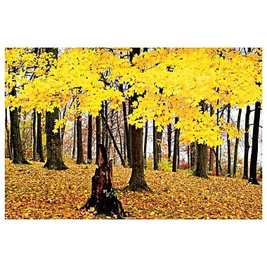 Fall Scene Maple by Sellers, Canvas, 24