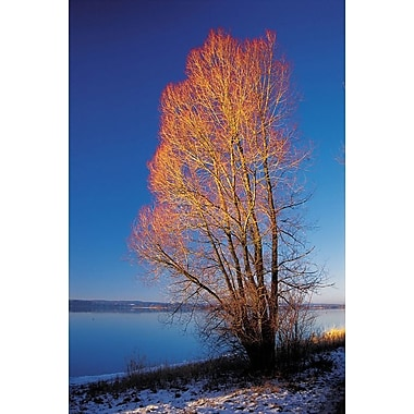 Illuminated Tree On A Lake, Stretched Canvas, 24