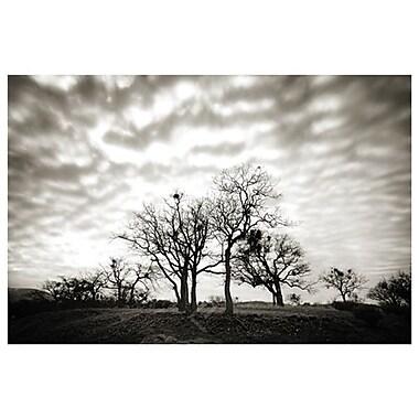 Lac Emigrant et arbres de Settle, toile, 24 x 36 po