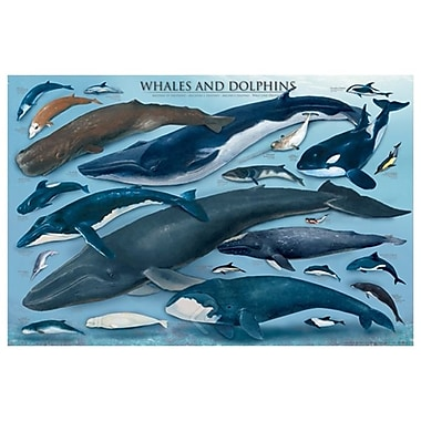 Whales and Dolphins, Stretched Canvas, 24
