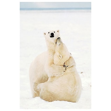 Playful Polar Bears, Stretched Canvas, 24