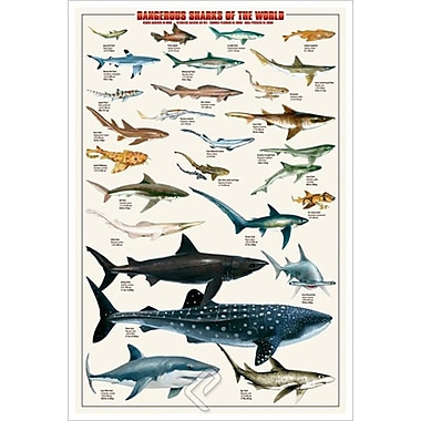 Dangerous Sharks, Stretched Canvas, 24