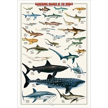 Requins dangereux, toile tendue, 24 x 36 po