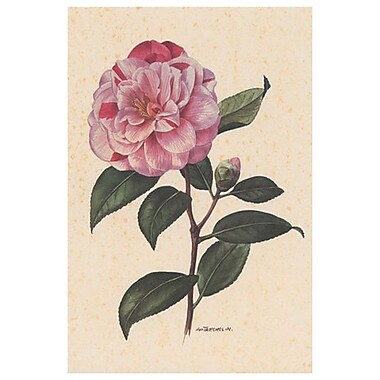 Pink Flower, Stretched Canvas, 24