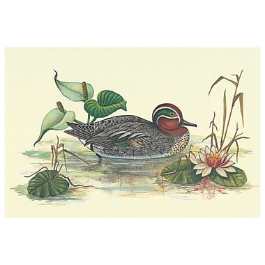 Mallard Duck, Stretched Canvas, 24