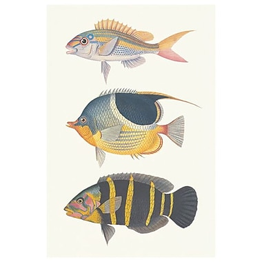 Tropical Fish III, Stretched Canvas, 24