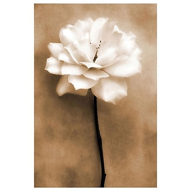 White Rose In Sepia by Zalewski, Canvas, 24
