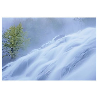 Bond Falls Misty Tree H by Burk, Canvas, 24
