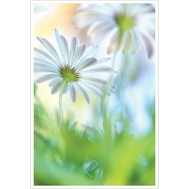 Daisy Dance by Connolly, Canvas, 24