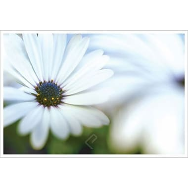 Daisy Blue 1 by Connolly, Canvas, 24