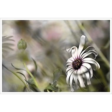 Silver Daisy 1 by Connolly, Canvas, 24