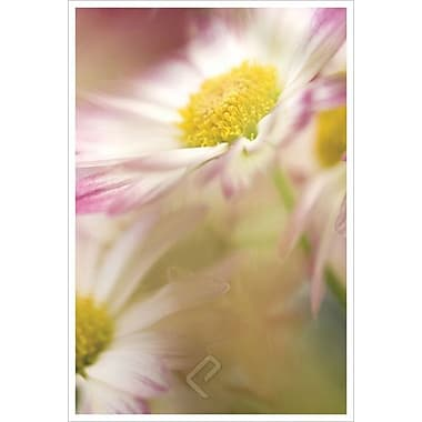 Pink Daisy by Connolly, Canvas, 24