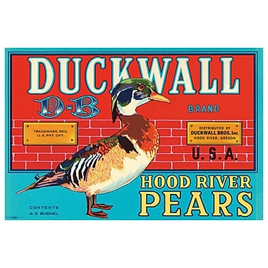 Duckwall D-B Hood River Pears, Stretched Canvas, 24