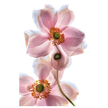 Anemone Japonica 4 by Davis,,, Canvas, 24
