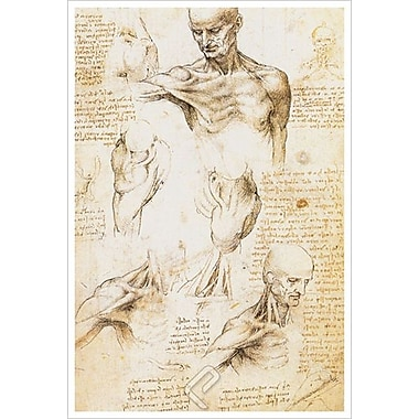 Anatomy Shoulder Region by da Vinci, Canvas, 24