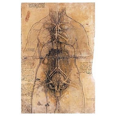 Dissection des organes d'une femme de da Vinci, toile, 24 x 36 po