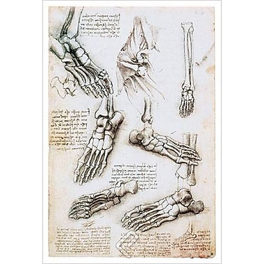The Lower Extremity by da Vinci, Canvas, 24