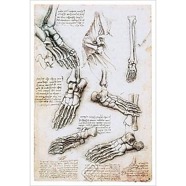 Os du pied de da Vinci, toile, 24 x 36 po