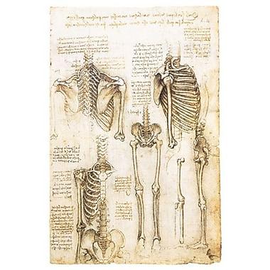 Études du squelette de Da Vinci, toile, 24 x 36 po
