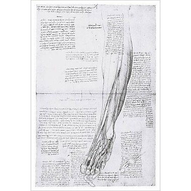 Muscles Anterior Leg by da Vinci, Canvas, 24