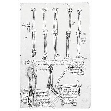 Les os et les muscles de la jambe de da Vinci, toile, 24 x 36 po