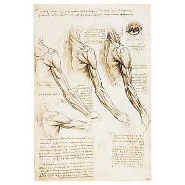 Les muscles des bras, de l'épaule et du cou de da Vinci, toile, 24 x 36 po