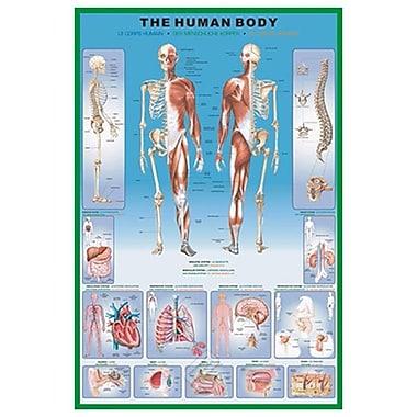 Le corps humain, toile tendue, 24 po x 36 po