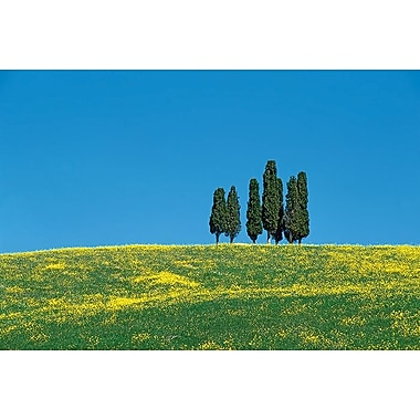 Tuscany Cypress Trees Spring, Stretched Canvas, 24