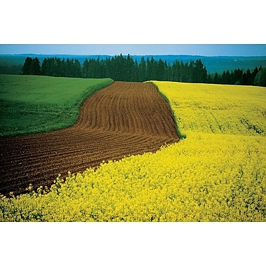 Lower Austria, Stretched Canvas, 24