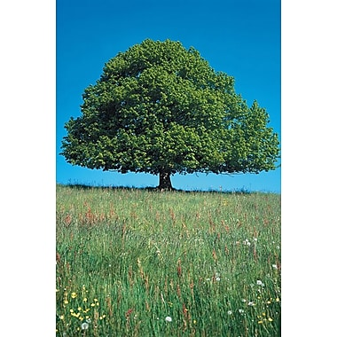 Green Tree on Green Field, Stretched Canvas, 24