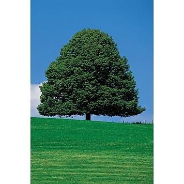 Silhouette large d'un arbre, toile tendue, 24 x 36 po