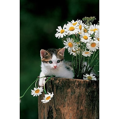 Kitten With Camomiles, Stretched Canvas, 24
