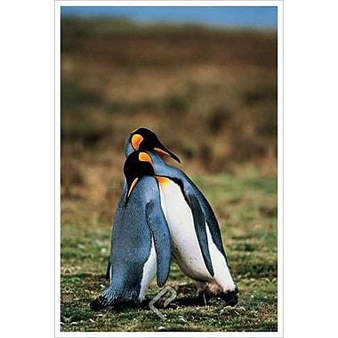 Pingouins qui s'endorment, toile tendue, 24 x 36 po