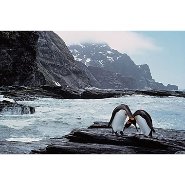 Pair Of Penguins Rugged Coast, Stretched Canvas, 24