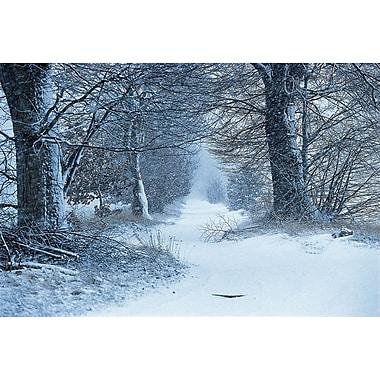 Sentier en hiver, toile tendue, 24 x 36 po