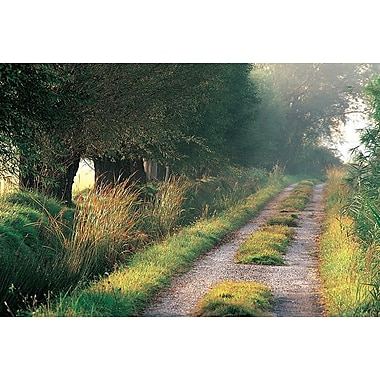 Tree-Lined Hollow Path, Stretched Canvas, 24