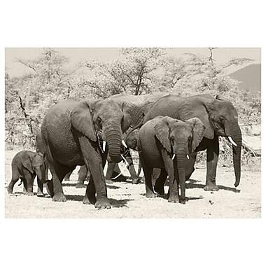 Éléphants 1 de Farrow, toile, 24 x 36 po