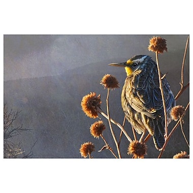 Meadow Lark by Vest, Canvas, 24