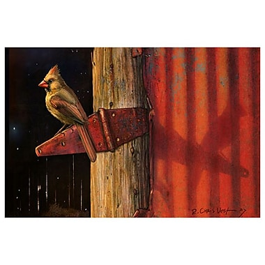 Cardinal by Vest, Canvas, 24