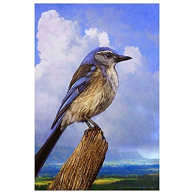 Scrub Jay by Vest, Canvas, 24