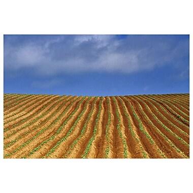 Pommes de terre et nuages par Grandmaison, toile de 24 x 36 po