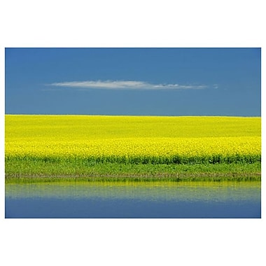 Cloud and Canola by Grandmaison, Canvas, 24